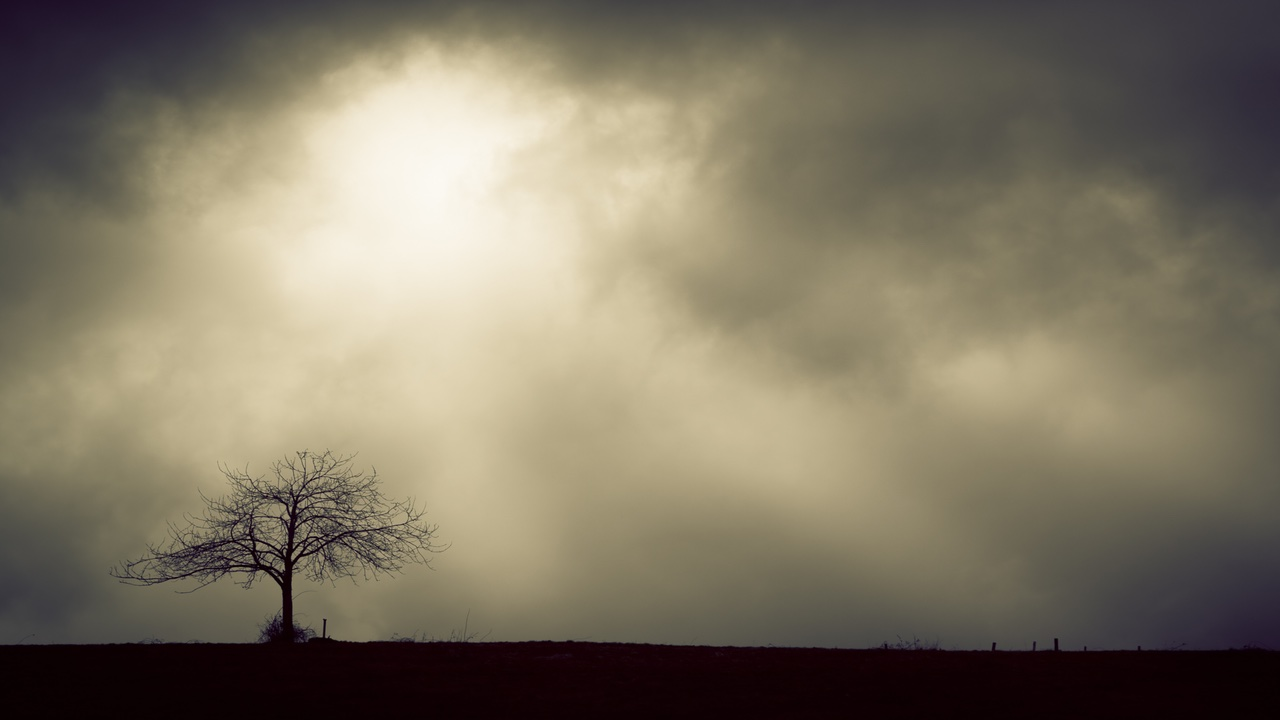Grief and Loss - a desolate tree with a cloudy grey sky background